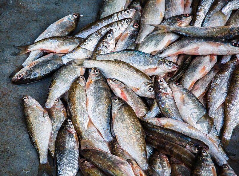 خبرنگاران 2 هزار قطعه ماهی در تایباد تلف شد