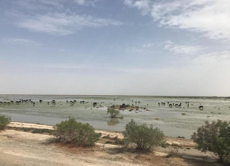 سه نفر در تالاب بین المللی هامون غرق شدند