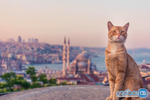 دانستنی هایی درباره شهر استانبول که شاید از آنها بی خبر باشید